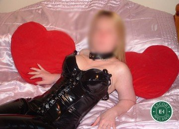 Spend some time with Welsh Kinky Bunny in Longford Town; you won't regret it
